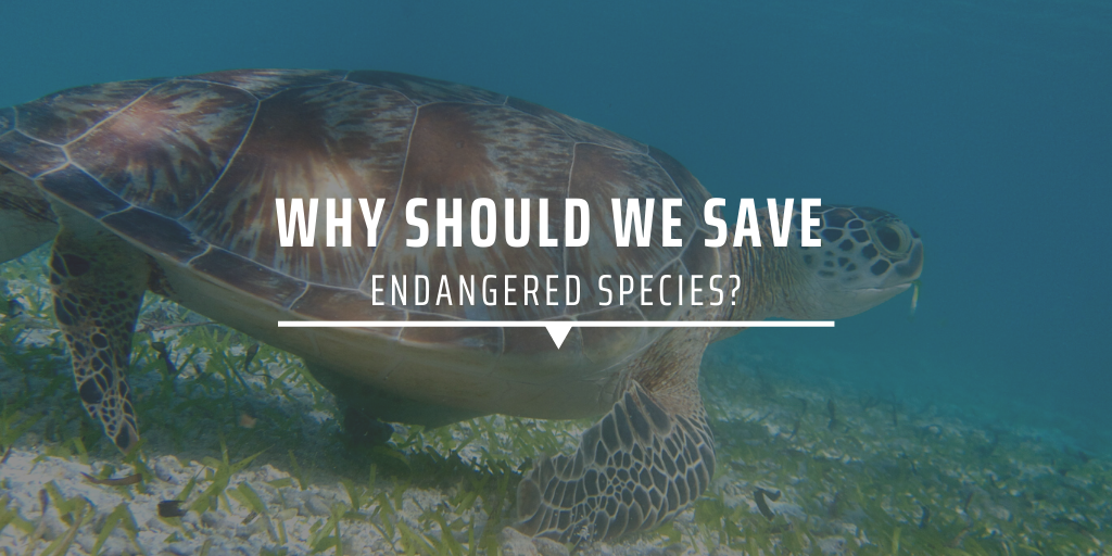 Why should we save endangered species?