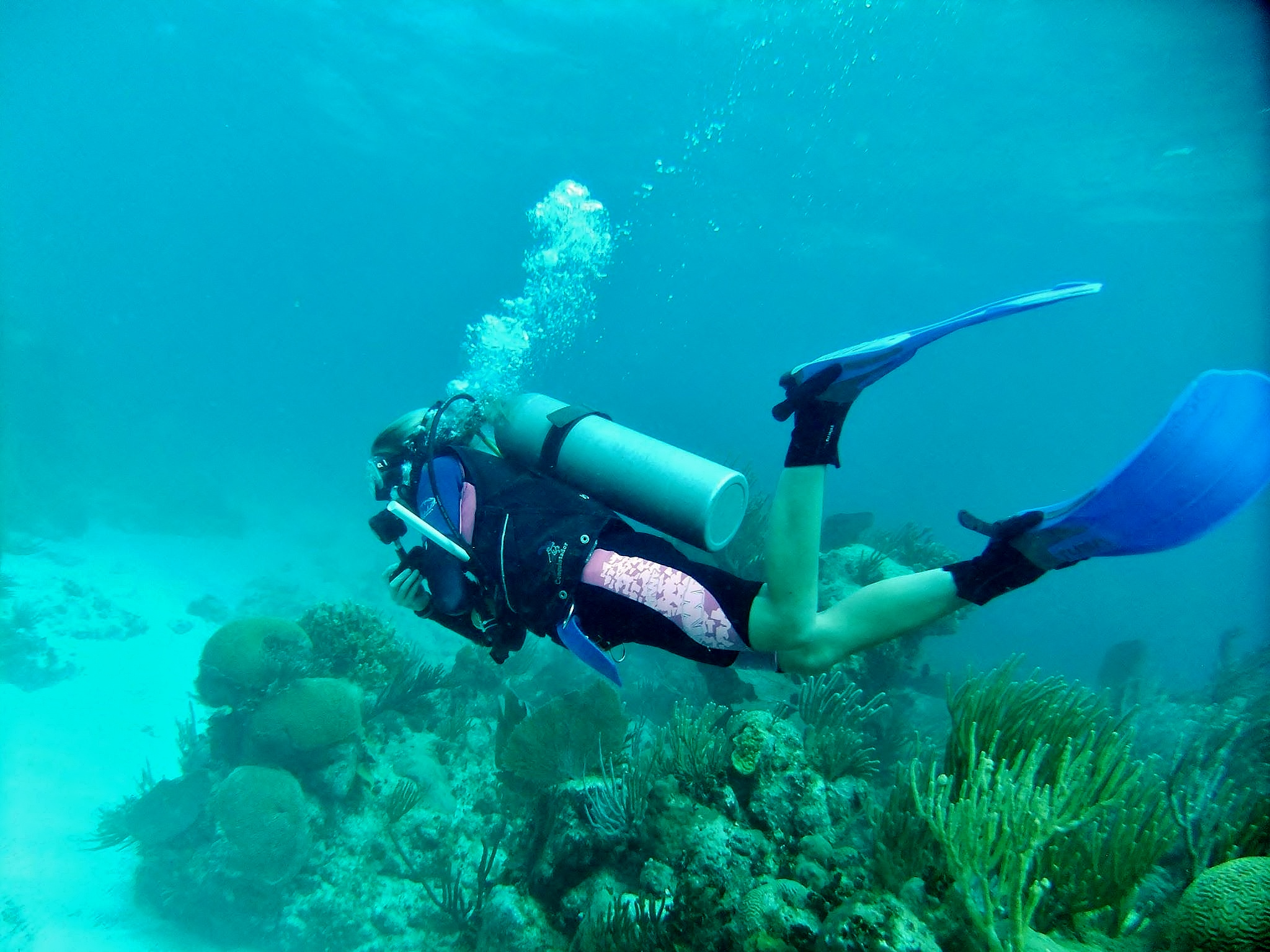 Marine expedition and padi divemaster dive center internship gvi usa enter the global scuba diving industry with a professional diving qualification combined with work experience and marine conservation training xflitez Images